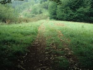 Camino a la ermita de Andra Mari de Kizkitza.
