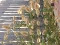 Naturaleza Dunas y Marismas