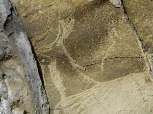 Antilope saiga de Altxerri