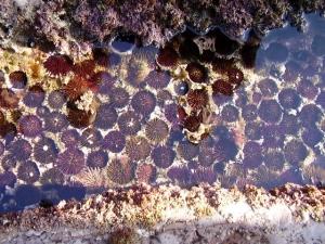 Flysch (deba zumaia biotopoa)