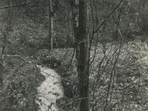 Regata procedente de Alano con arrastre de escoria y contaminación