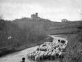 Rebaño de ovejas cerca de Arroa (Zestoa)