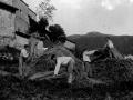 Campesinos de Beizama haciendo metas de trigo