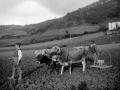 Campesinos de Aretxabaleta pasando la rastra