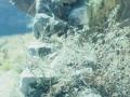 Jaizkibel mendian labe karegile baten aztarnak