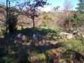 Arreginea (Foto: 4)