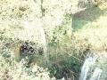Lenkaran Berri