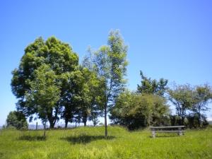Panorámica de árboles preciosos verdes.